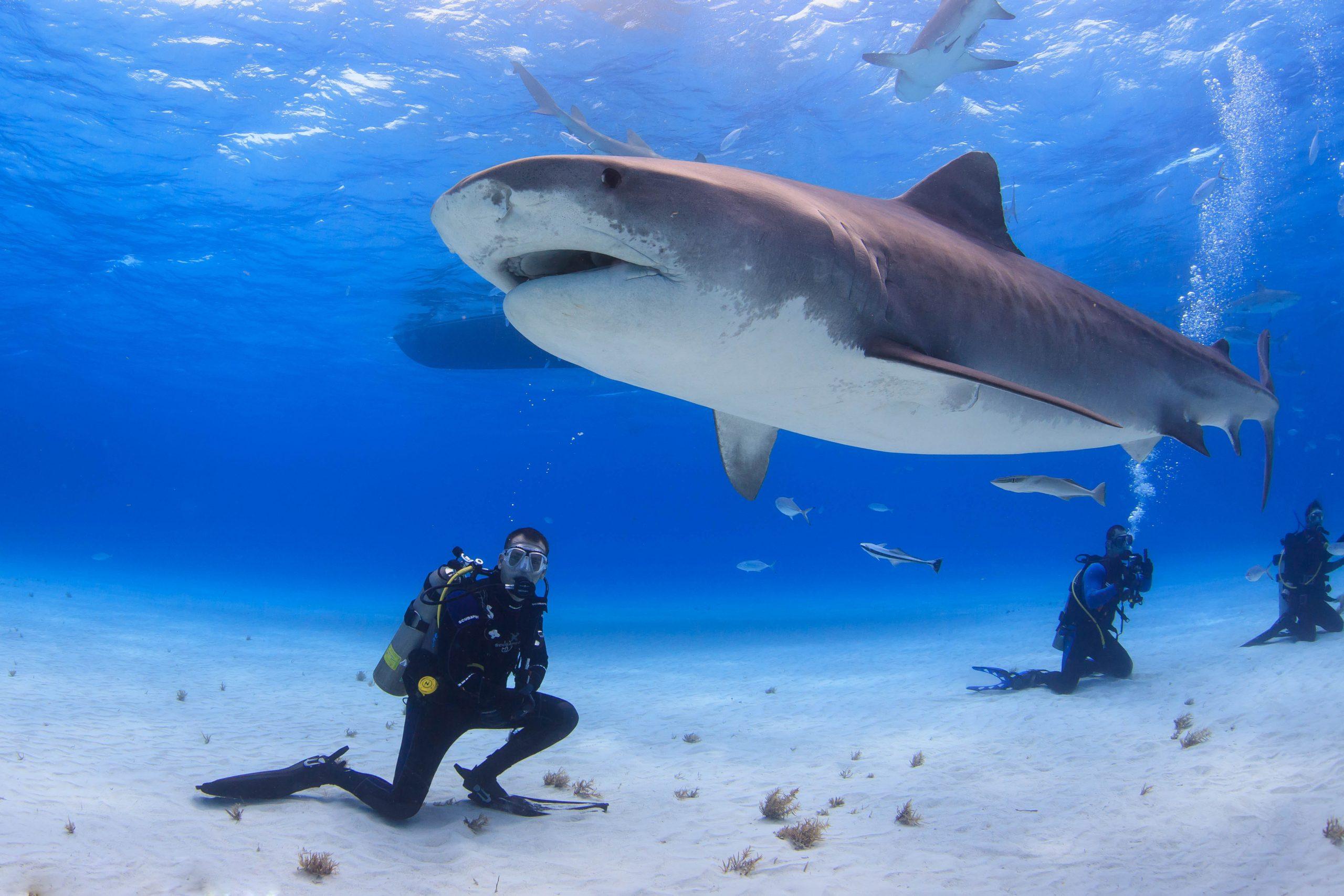 Olahraga Air Bersama Para driving di Kepulauan Bahama